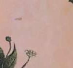 Pink 103897-103